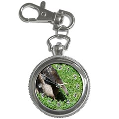 Giant Anteater Key Chain Watch