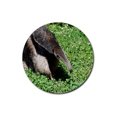 Giant Anteater Drink Coasters 4 Pack (Round)