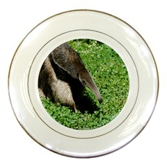 Giant Anteater Porcelain Display Plate