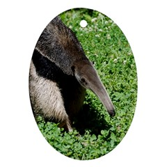 Giant Anteater Oval Ornament (Two Sides)