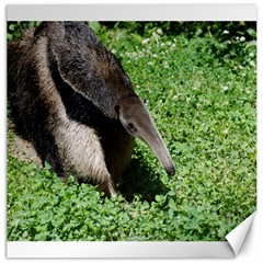 Giant Anteater Canvas 20  x 20  (Unframed)