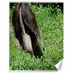 Giant Anteater Canvas 18  x 24  (Unframed)