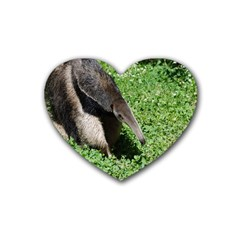 Giant Anteater Drink Coasters (heart)