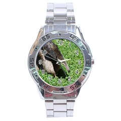 Giant Anteater Stainless Steel Watch