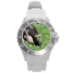 Giant Anteater Plastic Sport Watch (large)