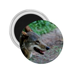 Red Wolf 2 25  Button Magnet