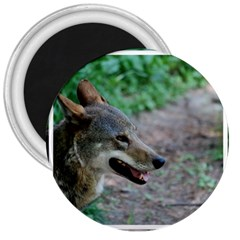 Red Wolf 3  Button Magnet