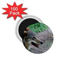 Red Wolf 1.75  Button Magnet (100 pack)