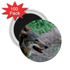 Red Wolf 2.25  Button Magnet (100 pack)