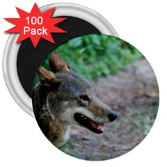 Red Wolf 3  Button Magnet (100 pack)