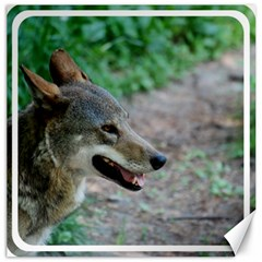 Red Wolf Canvas 12  x 12  (Unframed)