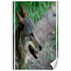 Red Wolf Canvas 12  x 18  (Unframed)