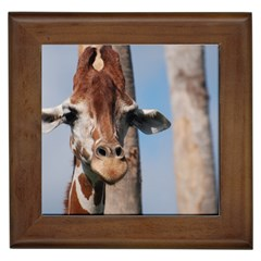 Cute Giraffe Framed Ceramic Tile