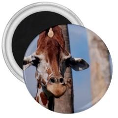 Cute Giraffe 3  Button Magnet