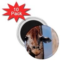 Cute Giraffe 1 75  Button Magnet (10 Pack)