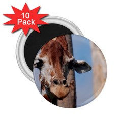 Cute Giraffe 2 25  Button Magnet (10 Pack)