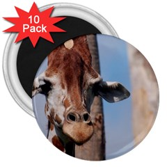 Cute Giraffe 3  Button Magnet (10 pack)