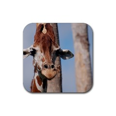 Cute Giraffe Drink Coasters 4 Pack (Square)