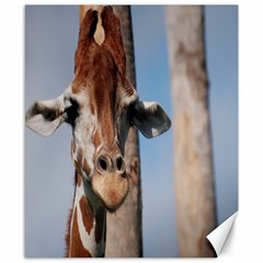 Cute Giraffe Canvas 8  x 10  (Unframed)