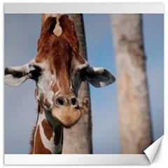 Cute Giraffe Canvas 20  x 20  (Unframed)