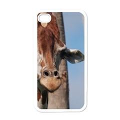Cute Giraffe Apple Iphone 4 Case (white)