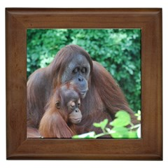 Orangutan Family Framed Ceramic Tile