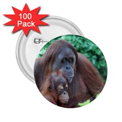 Orangutan Family 2.25  Button (100 pack)