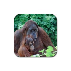 Orangutan Family Drink Coasters 4 Pack (Square)