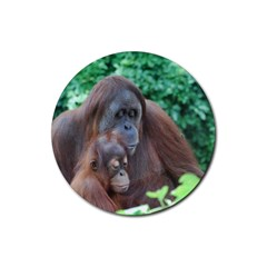 Orangutan Family Drink Coasters 4 Pack (Round)