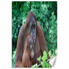 Orangutan Family Canvas 12  x 18  (Unframed)