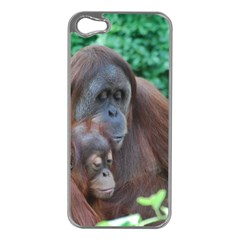 Orangutan Family Apple Iphone 5 Case (silver)