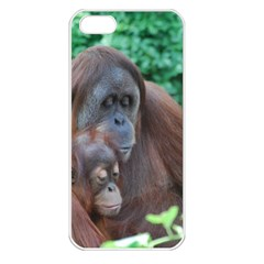 Orangutan Family Apple Iphone 5 Seamless Case (white)