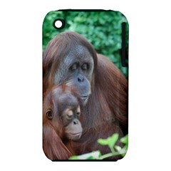 Orangutan Family Apple iPhone 3G/3GS Hardshell Case (PC+Silicone)
