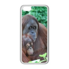 Orangutan Family Apple Iphone 5c Seamless Case (white)