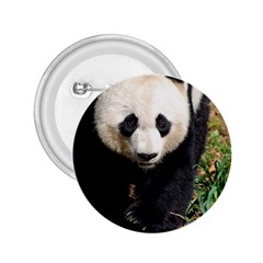 Giant Panda 2.25  Button