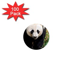 Giant Panda 1  Mini Button Magnet (100 pack)