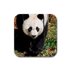 Giant Panda Drink Coasters 4 Pack (Square)