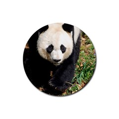 Giant Panda Drink Coaster (Round)