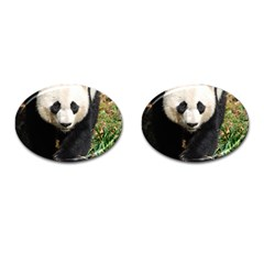 Giant Panda Cufflinks (Oval)