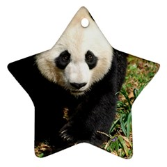 Giant Panda Star Ornament (Two Sides)