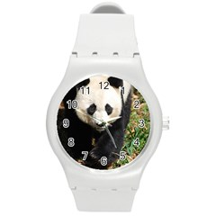Giant Panda Plastic Sport Watch (Medium)