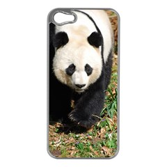 Giant Panda Apple Iphone 5 Case (silver)