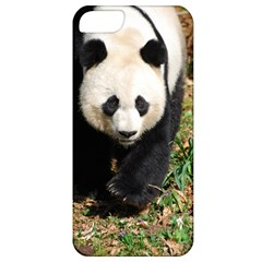 Giant Panda Apple Iphone 5 Classic Hardshell Case