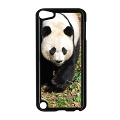 Giant Panda Apple iPod Touch 5 Case (Black)