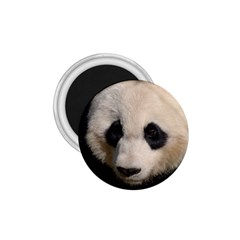 Adorable Panda 1.75  Button Magnet