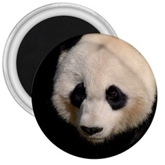 Adorable Panda 3  Button Magnet