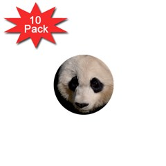 Adorable Panda 1  Mini Button (10 pack)