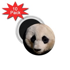 Adorable Panda 1.75  Button Magnet (10 pack)