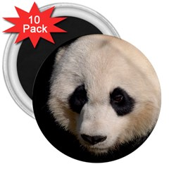 Adorable Panda 3  Button Magnet (10 pack)