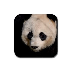 Adorable Panda Drink Coasters 4 Pack (square)